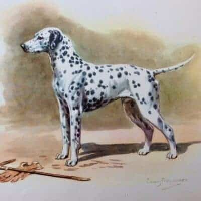 Roundup: Vintage Dalmatian Dog Art